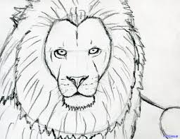 gallery sketches of lion faces drawing art gallery