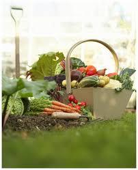Backyard Design Software Free Online Gardening Magazines Online Home Outdoor Decoration