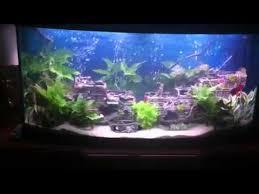 shipwreck aquarium