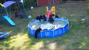 watch a fun loving family of bears crash a new jersey f fast company