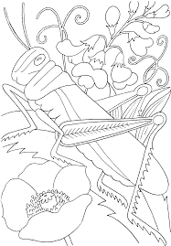 colouring pages frog funycoloring