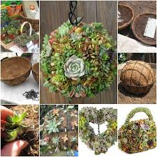 24 fresh innovative and peppy diy succulent garden ideas to