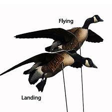 70 best goose obsession images on pinterest hunting stuff