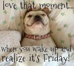 Happy Friday Meme - good morning happy friday meme social media la