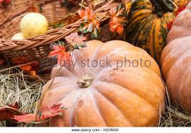 wicker pumpkin stock photos u0026 wicker pumpkin stock images alamy