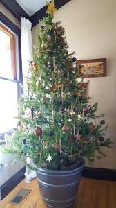 Menards Christmas Trees White by Owen Family Six