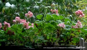 The Geranium On The Windowsill Just Died Living Green With Pets Bringing Plants Indoors The Creative Cat
