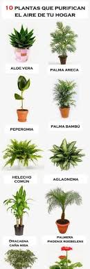 best plants for air quality 10 houseplants that clean indoor air by kerry plants pinterest