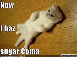 Food Coma Meme - simple food coma meme sugar a 80 skiparty wallpaper