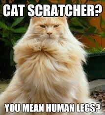 Mean Kitty Meme - cat scratcher you mean human legs overly manly cat quickmeme
