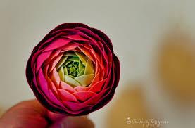 ranunculus flower gumpaste ranunculus tutorial ashlee