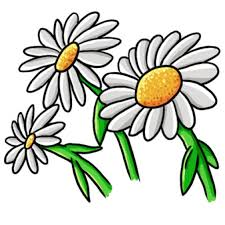 daisy white background images all white background