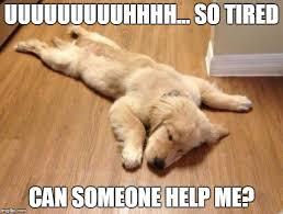 So Tired Meme - dog memes imgflip