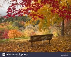 Mt Lofty Botanic Gardens Seat In Botanical Gardens Trees In Autumn Mount Lofty