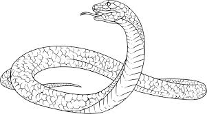 snakes coloring lovers