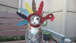 cat thanksgiving gif find on giphy