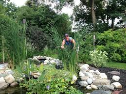 family garden reading pa pond maintenance u0026 service lebanon pa harrisburg allentown