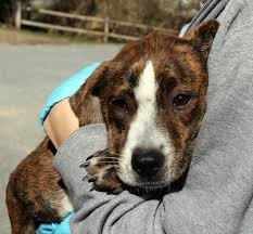 brewster animal shelter giving southern puppies a second chance