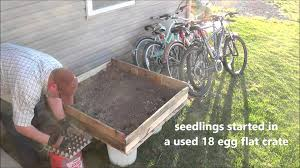 Make A Vegetable Garden by Transplanting Indoor Seedlings To Outdoor Garden Box Made Of