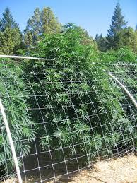 garden trellis netting canada u2013 garden ftempo