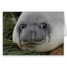 Seal Meme Generator - crying seal meme generator mne vse pohuj