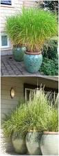backyards mesmerizing create privacy in backyard modern backyard