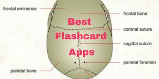 best flashcard app android 6 best flashcard apps free apps for android ios windows and mac