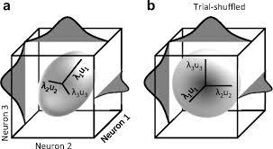 adaptation improves neural coding efficiency despite increasing