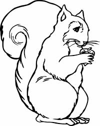 predator contoh gambar sketsa hewan tak berkaki images nama