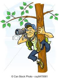 paparazzi clipart photographie arbre paparazzi photographie arbre clipart