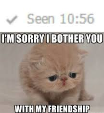 Sad Cat Memes - sad cat is sorry it bothered you with it s friendship meme