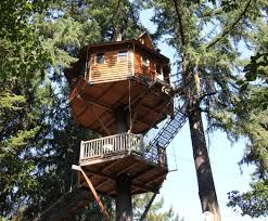 Tree Houses Root Costs Accommodations
