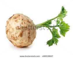 tuberous root stock images royalty free images u0026 vectors