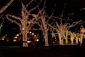 day 3 outdoor tree lights with the excitement that comes with this
