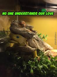 Lizard Toast Meme - the lizard memes best collection of funny the lizard pictures