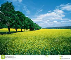 fields allee stock image image of agriculture patience