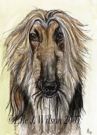 afghan hound rescue england afghan hound archives national purebred dog day
