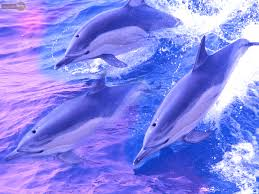 dolphin wallpapers u2013 animal spot
