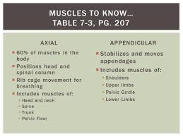 Muscles Of The Pelvic Floor Ppt by Chapter 7 The Muscular System Skeletal Striated Actin