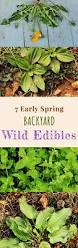 7 early spring backyard wild edible plants foraging for wild edibles