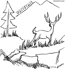 whitetailed deer coloring pages coloring pages to download and print