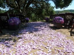 shades of purples lancaster estate winery shades of purplesblush magentas u2014 the