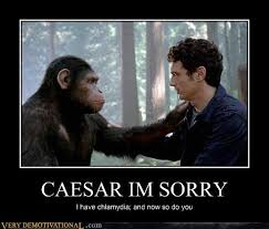 Ape Meme - memebase planet of the apes page 3 all your memes in our