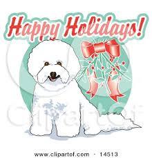 bichon frise cute cute white bichon frise dog sitting under mistletoe clipart