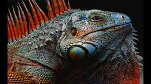 Seeking Episode 1 Lizard Galapagos 2017 Season 1 Episode 1 In The Grip Of The