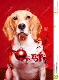 cute funny christmas royalty free stock images image 34939629