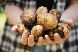 Chinese Root Vegetables - buy stock photos of root vegetables colourbox