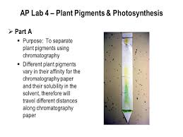 Lab Bench Photosynthesis Ap Exam Review Session Iii Be Prepared Not Scared Ppt