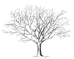 tree without leaves template coloring page free download