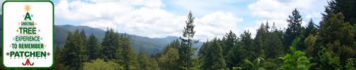 patchen california christmas tree farms cut your own christmas